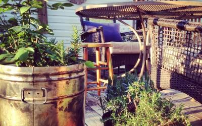 Patio Gardening Gone Wild…