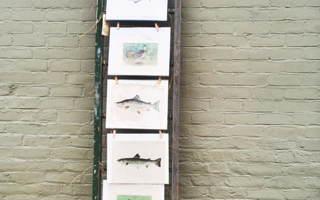 {history} The State of New York Fisheries, Game, and Forest Commission Wildlife Prints