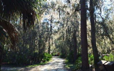 Fore Lake Campground in the Ocala National Forest